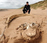 Aberdeen Carcass