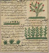 Plants-islam