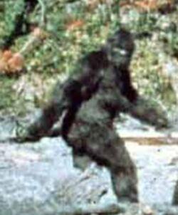 Patterson-bigfoot