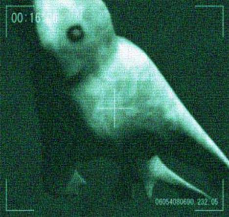 File:Antarctic humanoid 2.jpg