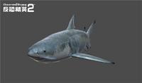 Sharkbackwear