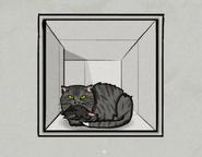 CatCase23