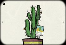 Cactus case 23