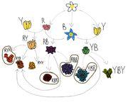 FlowerDiagram