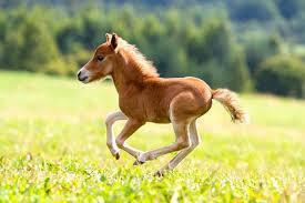 Horsess