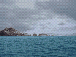 File:AWDR REEF.png