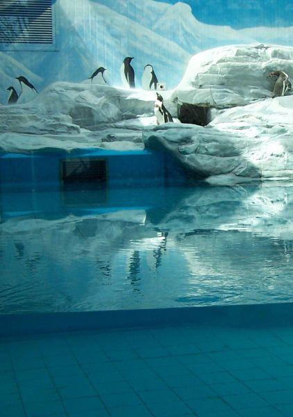 Pinguspenguinarium