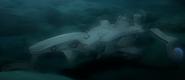 Dolphin III underwater