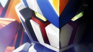 Sigmaorbis closeup