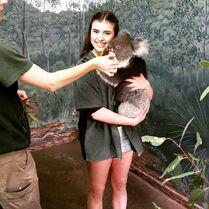 Kalani koala Oz2015