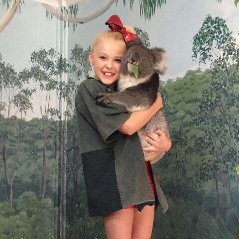 File:JoJo koala 2015-03-17b.jpg