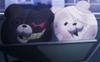 Shiro and Kurokuma heads