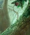 Acorn Symbol Deep Forest2