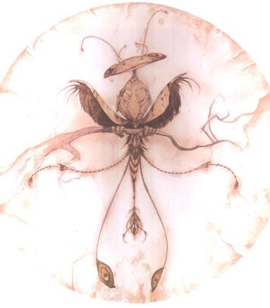 File:Windsifter larva.jpg