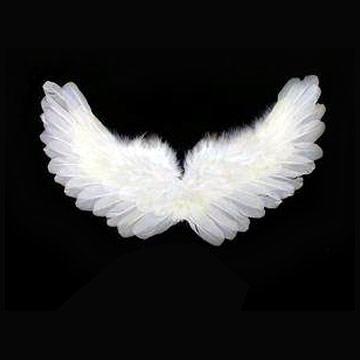 File:White wings-2261.jpg
