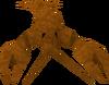 Crayfish detail