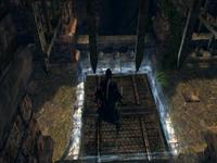 Common trap door