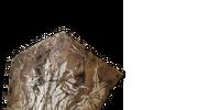 Hollow Soldier Shield (Dark Souls II)