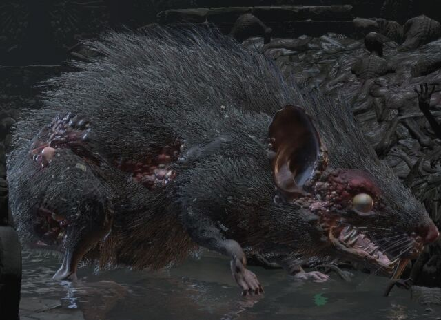 File:Giant rat.jpg