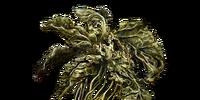 Green Blossom (Dark Souls III)