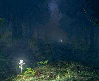 Darkrootforest