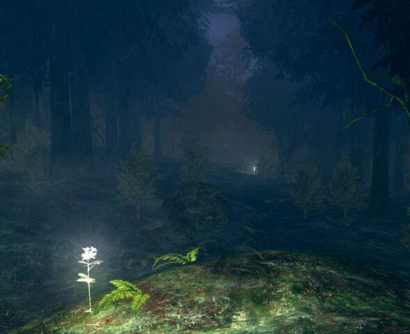 Arquivo:Darkrootforest.jpg