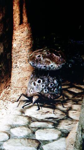 File:Poison Horn Beetle.jpeg