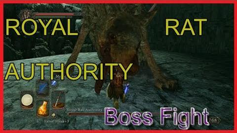 Dark Souls 2 Royal Rat Authority BOSS FIGHT ~ Guide for players