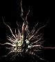 File:Helm Sunlight Maggot.png