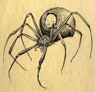 Modred Spider