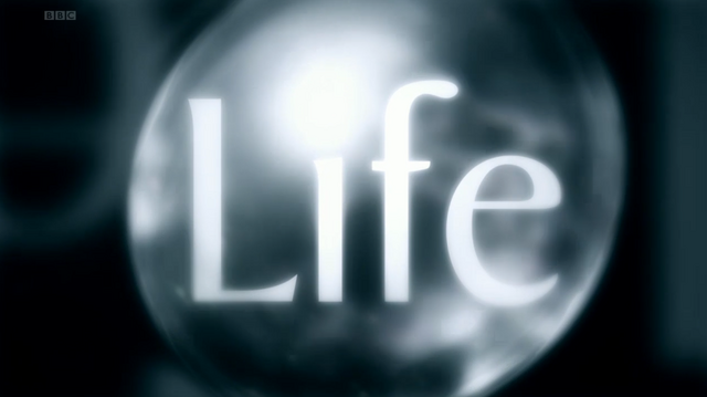 File:BBC Life title card.png