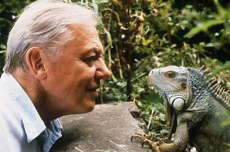 File:David-attenborough.jpg