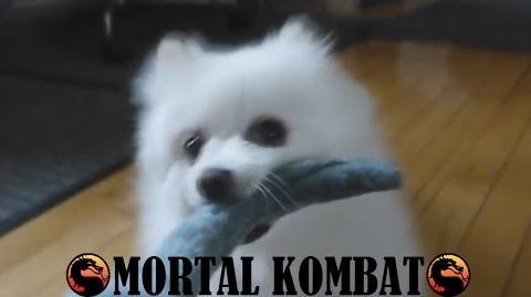 Gabe the Dog - Mortal Kombat