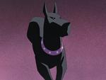 Ace (dog)