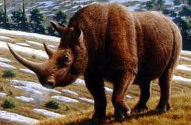 File:Woolly Rhino.jpg
