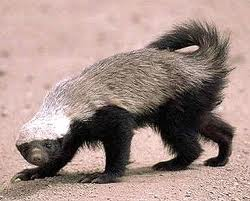 File:Honeh Badger.jpg