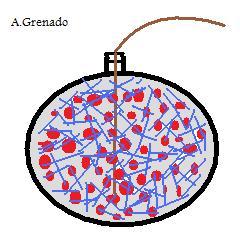 File:GrenadoA.jpg