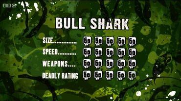 S3 DR bull shark
