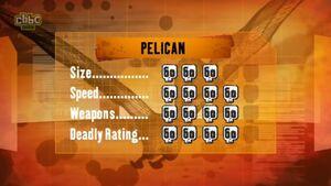 S1 DR pelican