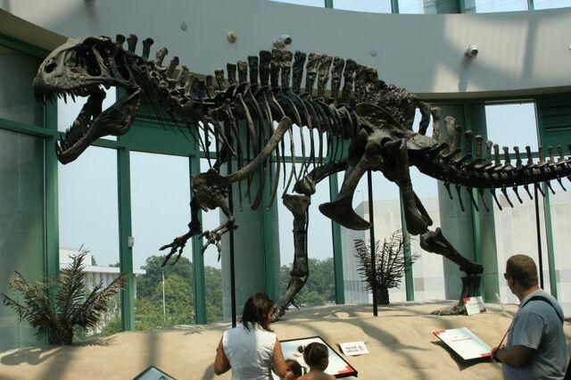 File:Acrocanthosaurus skeleton (1).jpg