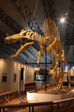 File:250px-Mounted Spinosaurus.jpg