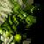 Eren Icon