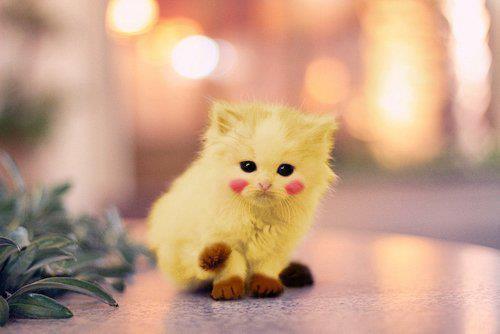 File:Picki cat.jpg
