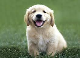 File:Cute puppy.jpg