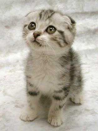 File:Cute-kitten.jpg