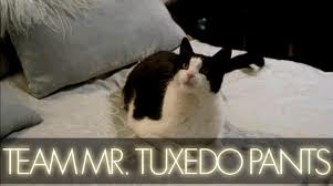 File:Team tuxedo.jpg