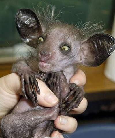 File:One. ugly. monkey..jpg