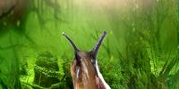 Swamplands slug
