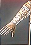 Binded Gloves