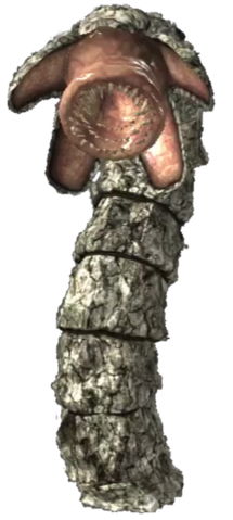 File:Rock Worm.png
